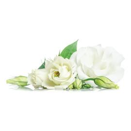 Hydrolat Z Białej Róży (Rose Alba) Organic